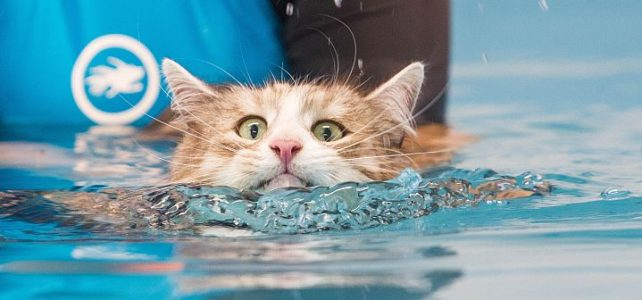 swimmingcat